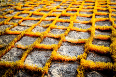 Moss on the granite path. In the atfternoon sunlight Royalty Free Stock Photo