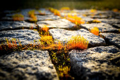 Moss on the granite path. In the atfternoon sunlight Royalty Free Stock Photography