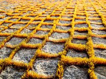 Moss on the granite path Stock Images