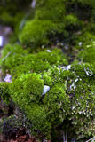 Moss and grass. Part of the ground area with a moss and grass stock images
