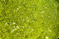 Moss, grass, background. Like a Moss, grass - as a background for design Royalty Free Stock Image