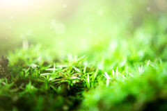 Moss and grass Stock Photos