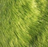 Moss grass carpet Stock Photos