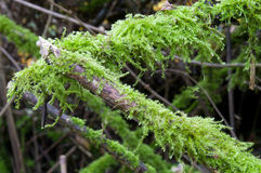 Moss green Royalty Free Stock Image