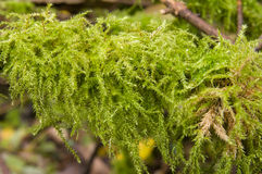 Moss green Royalty Free Stock Photos