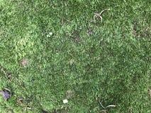 The moss Stock Photo