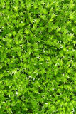 Moss green background Royalty Free Stock Photography