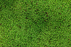 Moss green background Stock Photos
