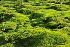Moss green background. Royalty Free Stock Photos