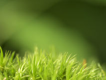 Moss on green background. The moss on the bottom in plain green and brown background Stock Images