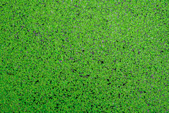 Moss green background Royalty Free Stock Photos