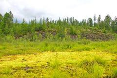 Moss green. Beautiful Siberian moss green. August. Russia Royalty Free Stock Photo