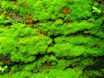 Moss Green. And fresh stuck to the Wall this can refreshing eyes who viewed this Royalty Free Stock Image