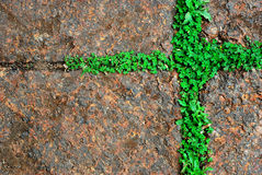 Moss green grass background texture design. In thailand stock image