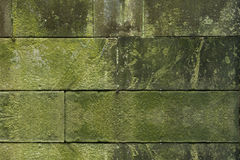 Moss green grass background texture Stock Photo