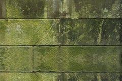 Moss green grass background texture. Design Stock Photo