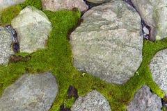 Moss green, grass among the grey stones, cobblestone pavement Royalty Free Stock Image