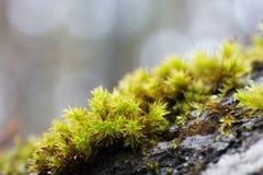 Moss Stock Image