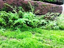Moss green that grows on rocks brick. A moist environment Royalty Free Stock Photos