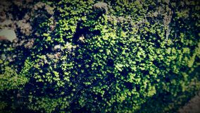 Moss and green micro plants Royalty Free Stock Photography