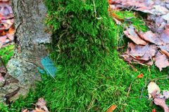 Moss. Green moss on a tree in autumn Royalty Free Stock Images