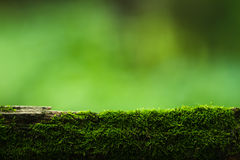 Moss and green nature background Royalty Free Stock Photo