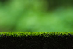 Moss and green nature background Stock Images