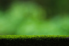 Moss and green nature background Stock Photography