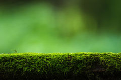 Moss and green nature background Royalty Free Stock Image