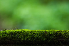 Moss and green nature background Stock Image