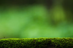 Moss and green nature background Stock Photos