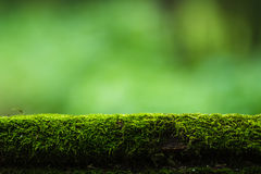Moss and green nature background Royalty Free Stock Photos