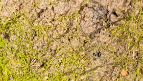Moss green in nature. macro Royalty Free Stock Image