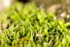 Moss green in nature. macro. In the park in nature Stock Photography