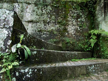 Moss and green plants on the wall. The rainy season in South China, the moss on the wall and the green plants Royalty Free Stock Images