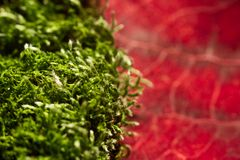 Moss green and red leaf Royalty Free Stock Photos