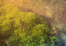 Moss green. On rock on ground Stock Photography