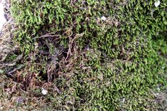 Moss green soil earth life nature soft texture forest fresh leaf growth royalty free stock photos