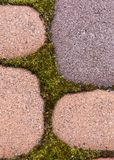 Moss and green weeds in the background between paving slabs stock photography