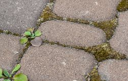 Moss and weeds in the background between paving slabs royalty free stock images