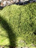 Moss green wet Royalty Free Stock Photo