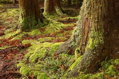 Moss, Green, Woods, Forest, Trees Stock Photo