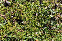Moss on the ground Royalty Free Stock Photos