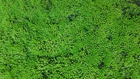 Moss is on the ground with moisture. Green nature background and texture Stock Image