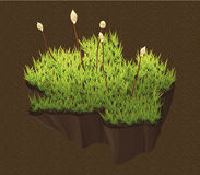 Moss on the ground stock illustration