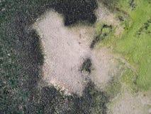 Moss Grow auf dem alten Zement-Boden lizenzfreie stockfotografie