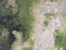 Moss Grow auf dem alten Zement-Boden lizenzfreies stockfoto