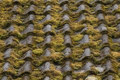 Moss grow on natural tile in the old farmhouse royalty free stock photo