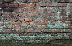 Moss grow on old brick wall Royalty Free Stock Photos
