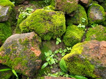 Moss grow rock. Royalty Free Stock Photo